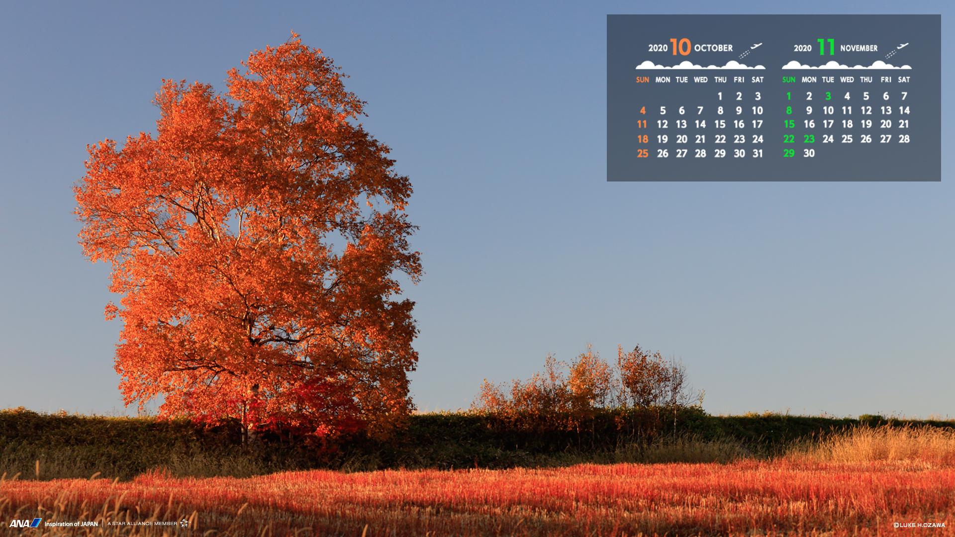壁紙カレンダー シンプルに使える飛行機画像をダウンロード Ana
