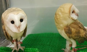 Hakata Owl Cafe Reservations in Fukuoka