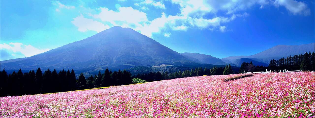 小林市は生駒高原のコスモスとえ...